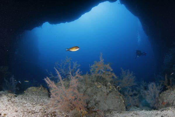 Scuba Diving - Azores São Jorge Island