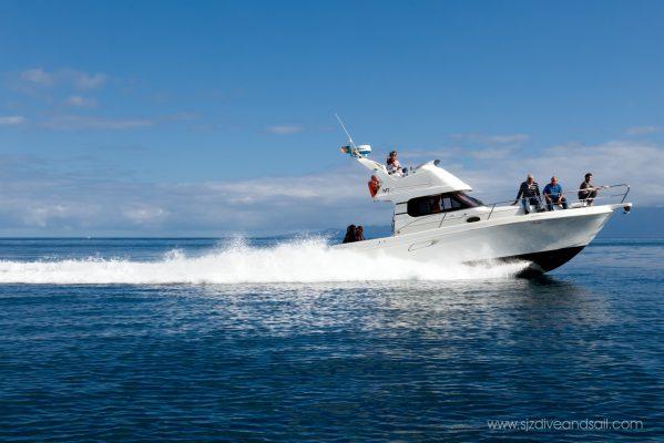 Boat Tours - Azores São Jorge Island